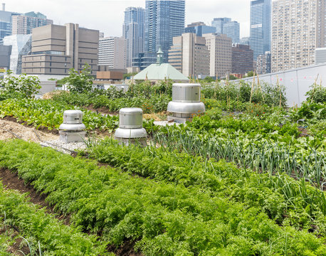Urban Rooftop Farm