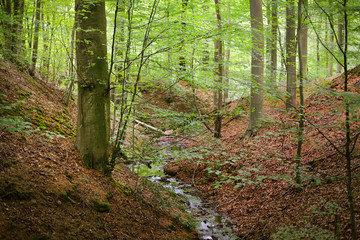 Forest spring on the hills in Belgium.