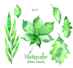 Set of green watercolor leaves