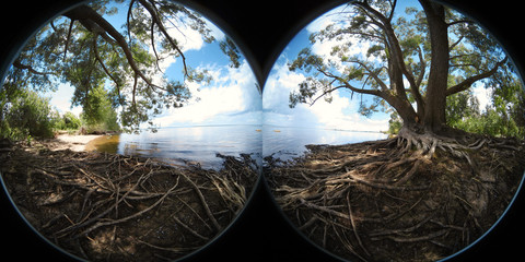 Beautiful Panorama. Large tree with roots on the coast of river (360 degrees image)