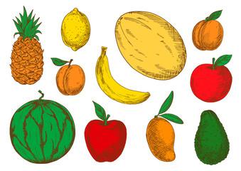 Colorful sketch of vegetarian fruits