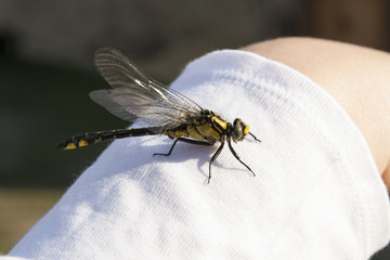 Dragonfly on hand photo