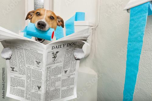 Пес в туалете без смс