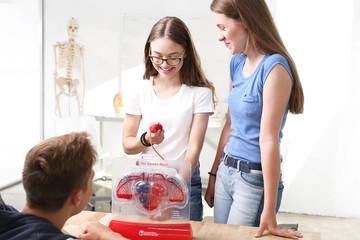 Serce. Uczniowie na lekcji biologii oglądają model ludzkiego serca