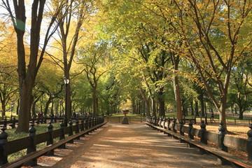 セントラルパーク ニューヨーク 並木道
