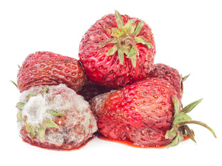 Rotten strawberry isolated on white