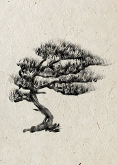 Pine. Drawing tree on a beige rice paper. Black silhouette wood.
