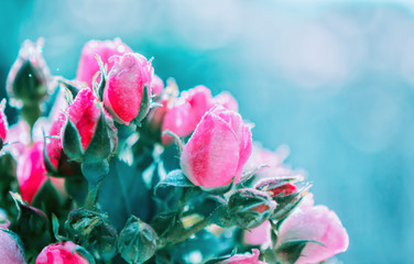 Blurred floral background of roses and blue bokeh
