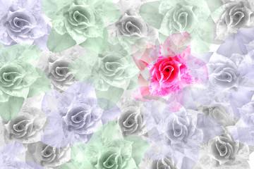 pink Adenium obesum flower pattern background