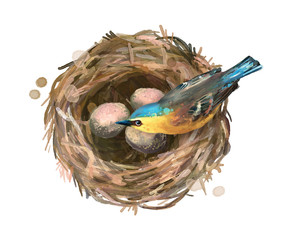 Bird at Nest