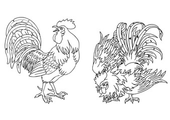 Fervent and fighting roosters contour