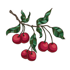 Cherry branch with cherries and leaves