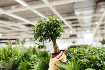 Cropped image of young woman holding potted plant in garden center