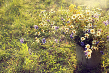 summer field flowers/ large bouquet of daisies and cornflowers standing in a bucket on the grass