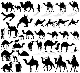 Camel and dromedary vector silhouettes collection