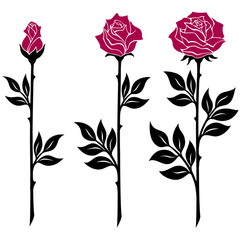vector illustration, decoration element, black and white rose branches with red flowers in different bloom stages
