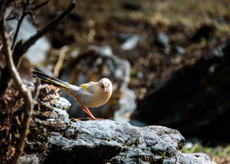 The bird perched on a rock.