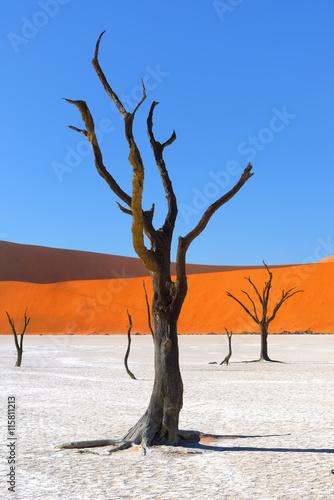 Fototapete Deadvlei, Sossusvlei. Namibia