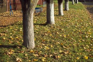 fall trees landscape