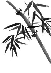 Bamboo trees hand-drawn, ink, Japanese painting style sumi-e.