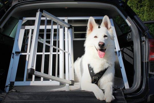 Hunde Im Auto