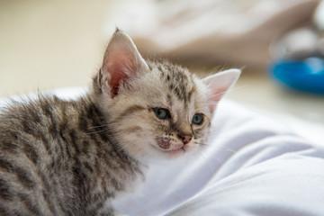 Cute lonely kitten
