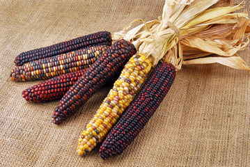 Cob corn Indian on hessian fabric