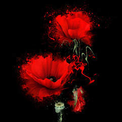 luxurious red poppy on black background