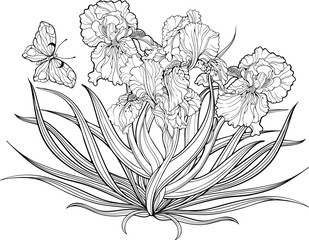 iris flowers and a butterfly. Coloring page.