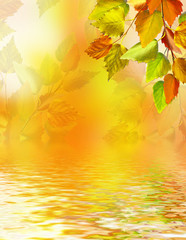 bright colorful foliage on a background of the autumn landscape