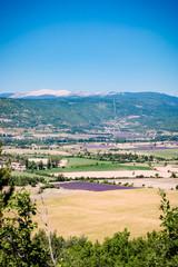 Champs de lavandes et Mont Ventoux sur la route de Sault