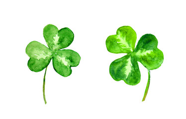 Clover leaves. Trefoil. Watercolor illustration