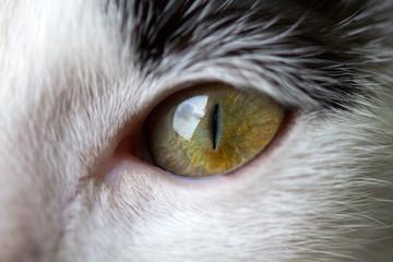 Closeup of a cat's eye