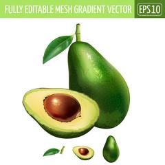 Avocado on white background. Vector illustration