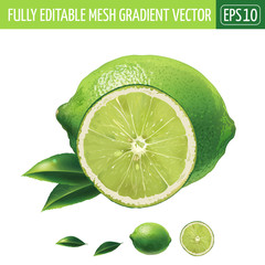 Lime on white background. Vector illustration