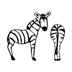 Two abstract Zebra