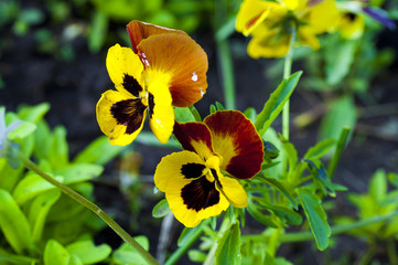 Желто коричневые цветы
