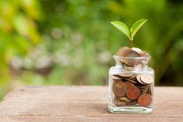 Plant Growing In Savings Coins on wooden - Investment And Intere