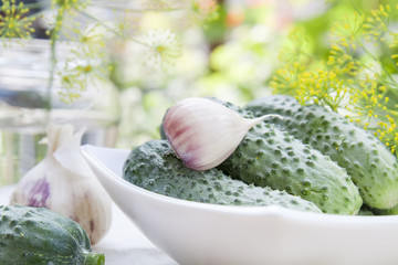 Fresh cucumbers in white pot with flowers dill and garlic on green summer background