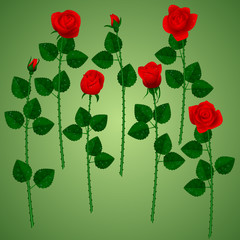 Set of red roses on green background