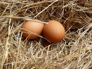 Farm Chicken Eggs
