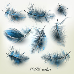 Set of vector realistic blue feathers