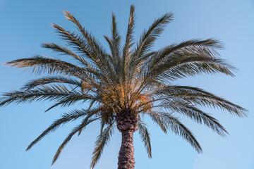 Palme unter blauen Himmel
