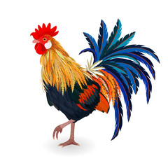 cute colorful Cockerel for your design
