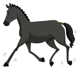 Black horse running alone