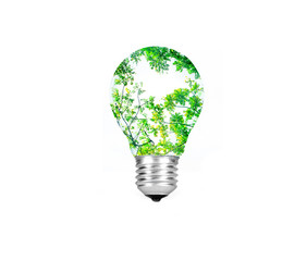 the Light bulb green tree inside isolated on white background