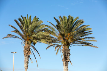 An image of  palm tree in the blue sunny sky