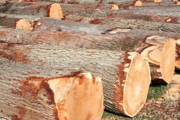 Holzstämme Baum Holz Stamm