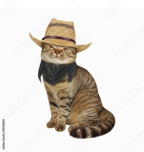 кот соломенная шляпа бесплатно