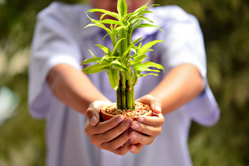 Student hand holding young plant in hands against spring green background. Ecology concept